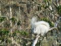 White Squirrel in Tree Royalty Free Stock Photos