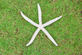 White starfish on green grass Royalty Free Stock Photo