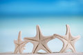 White starfish with ocean, white sand beach, sky and seascape Royalty Free Stock Photo