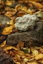 White stone lying on a dark stone on autumn leaves Royalty Free Stock Photo