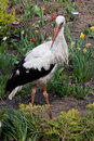 White stork a in the park Royalty Free Stock Photos