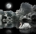 White swan at night Royalty Free Stock Photos
