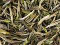 White Tea - Bai Mu Tan Stock Images
