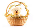 White teddy bear in a basket Stock Photos