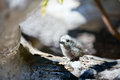 White tern baby Stock Photography