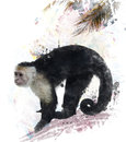 White throated capuchin monkey watercolor digital painting of Royalty Free Stock Photos