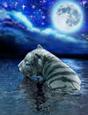 White tiger swims in a moonlit lake with stars and clouds above Stock Photography