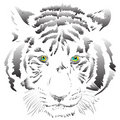 White tiger vector Royalty Free Stock Photography