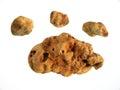 White truffles Royalty Free Stock Image