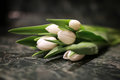 White tulip gift box green background Royalty Free Stock Photo