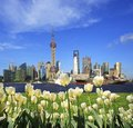 White tulips with Shanghai skyline of city landscape architectur Royalty Free Stock Photo