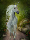 White unicorn a beautiful trots down a forest path looking for companions Royalty Free Stock Photography