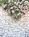 White-washed wall of rough stone with flowers Stock Image