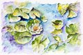 White water lily in small pond the grows a handmade watercolor painting illustration on a paper art background Royalty Free Stock Photo