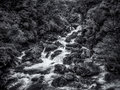 White water stream rushes over boulders in the Fiordland of New Zealand with textural vegetation in black and white Royalty Free Stock Photo