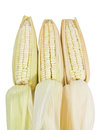 White waxy corn Royalty Free Stock Image