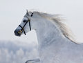 White Welsh horse runns on the hill Royalty Free Stock Image