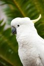 White wild Cockatoo bird in jungle Stock Photo