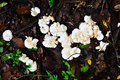 White wild mushrooms in the forest Royalty Free Stock Images
