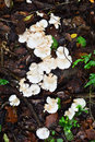 White wild mushrooms in the forest Stock Photo