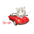 White wild smoking tiger retro red car driver Royalty Free Stock Photo