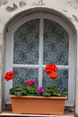 White window with flower pot Stock Image