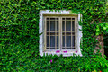 tree window Royalty Free Stock Photo