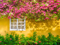White Window, Flowers, Yellow Exterior Wall Home Royalty Free Stock Photo