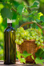 White wine bottle on table young vine and bunch of grapes against green spring background Royalty Free Stock Photography