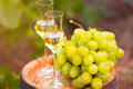 White wine glass, young vine and bunch of grapes against green Royalty Free Stock Photo