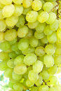 White wine grapes on the branch in a sunny day Stock Photo