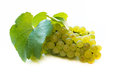 White wine grapes close up of over background Royalty Free Stock Photos