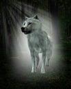 Blanco lobo bosque