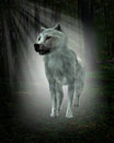 Biely vlk les ilustrácie
