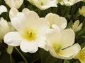Biely a kvety