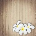 White and yellow frangipani flower on wood background Royalty Free Stock Photo