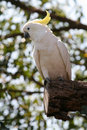 White and yellow parrot Stock Photos