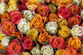 White, yellow and pink roses Royalty Free Stock Photo