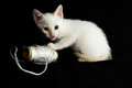 White Young Baby Cat Stock Photos