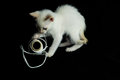 White young baby cat on a black background Stock Images