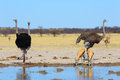 Who s who at the waterhole in botswana Stock Photo