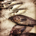 Whole Branzino and Black Sea Bass Royalty Free Stock Photo