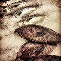 Whole Branzino and Black Sea Bass Royalty Free Stock Photo