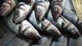 Whole Branzino Fish at Market Royalty Free Stock Photo