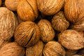 Whole coconuts closeup of background of in a pile Stock Image