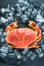 Whole crab on dark slate and ice Royalty Free Stock Photo