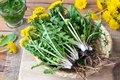 Whole Dandelion Plants With Ro...