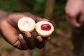 Whole Fresh Nutmeg And Mace