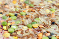 Whole Grains & Beans Soup Mix Close-Up Royalty Free Stock Photography