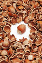 Whole hazelnut and cracked shells Royalty Free Stock Image